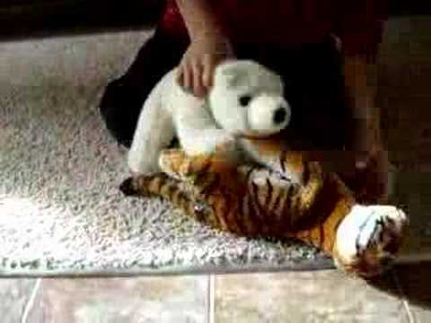 Difference Between Lions and Tigers  Difference Between