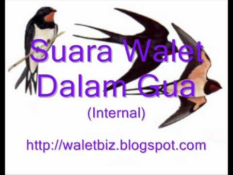 Walet Suara Dalam Gua.wmv video