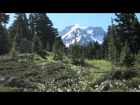 A Virtual Hike in the Mt. Hood Wilderness Video