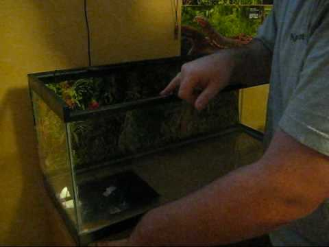 How to Set up a Ball Python Enclosure (Part 1)
