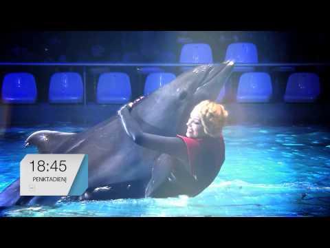 Delfinai ir žvaigždės: sausio 30 d. laidos anonsas