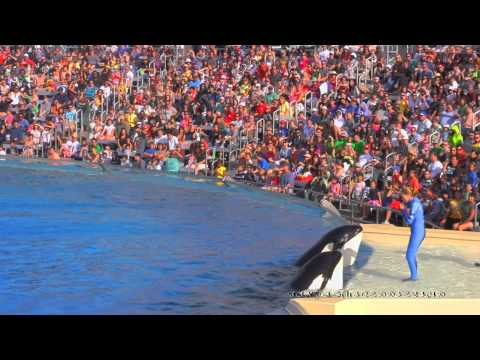 The Shamu Show One Ocean 2011 HD