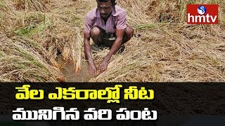 Pethai Cyclone Destroy Paddy Crops in Kakinada  | hmtv