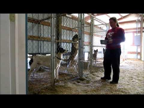 plans for dog kennel