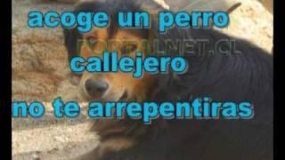 Conmovedora acción de perro callejero