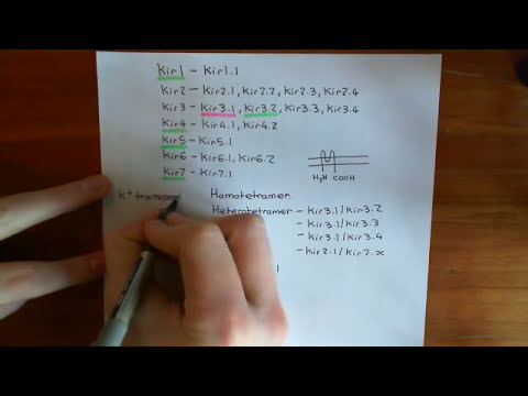 Insulin Synthesis and Secretion Part 4