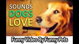 Dogs Love Each other Making Fun | Funny Dog Videos | Funny Pets