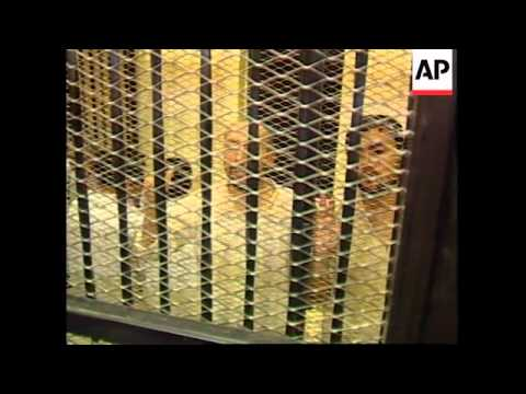 EGYPT: CAIRO: TWO SUSPECTS PLEAD GUILTY TO BOMBING TOURIST BUS