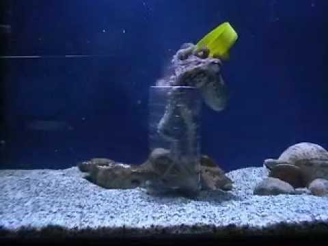 Aquaworld aquarium hersonissos crete olivia opens her for Spacearium aquariums