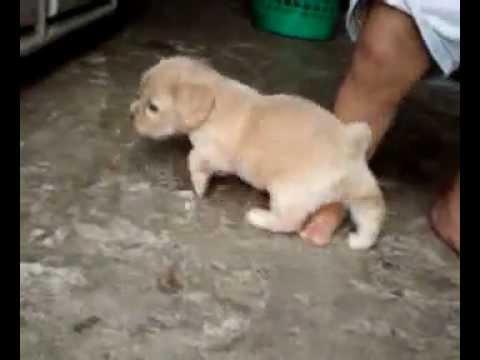 ataque de un animal salvaje a una niña de un año