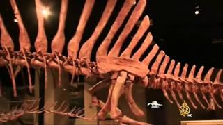 اكتشاف هيكل ديناصور على الحدود الجزائرية المغربية