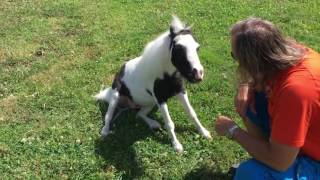 Einstein the Smallest Stallion Has a Pep Talk