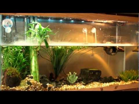Planted Turtle Tank Red Ear Slider (RES) With Home Made Co2 Re...