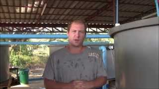 Stop Hydroponic Tomato Cracking, and Cleaning Aquaponic Filters
