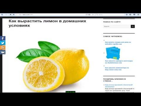 Как вырастить лимон дома. Полезные советы и рекомендации.