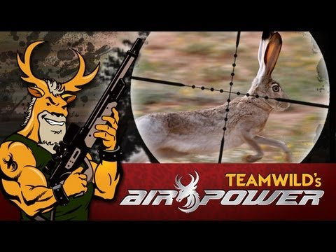 Extreme Airgun Hunting - Texan Rabbits with the Daystate Wolverine .303