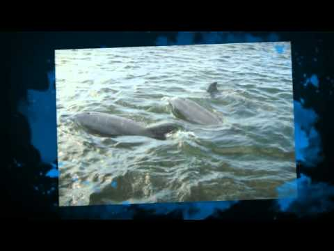 Dolphins at Crystal River Fl 2012 in Pontoon boat.mp4