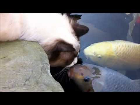 Cat loves his fishy friend (very special)