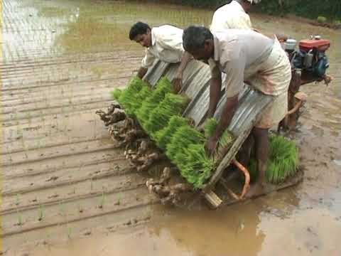 Machine Transplantation of Paddy