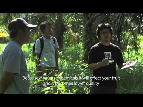 WAGS Video - Sabah Beluran - Extended (Nov 2014, Tom Slater)