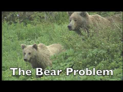 The Bear Problem – Dr. Lance Turnbuckle (from New D.Q.T.'s Neighborhood – Episode 3)