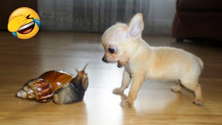 Play this video Cute Dogs And Cats That Will Make You Laugh р - Funny Animals Compilation 5 р