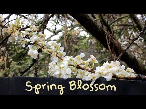 Spring Blossom (Music Video ft. Charlie Chaplin Greatest Speech Ever [from The Dictator])
