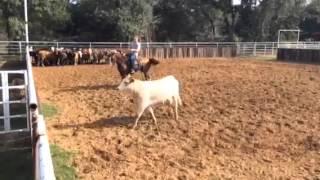 X-man- Jared Lesh cowhorses