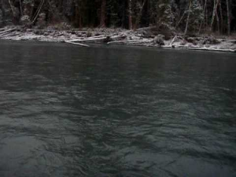 steelhead fishing on the hoh