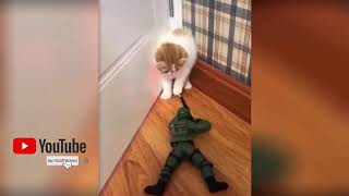 Cute funny animals - video 03