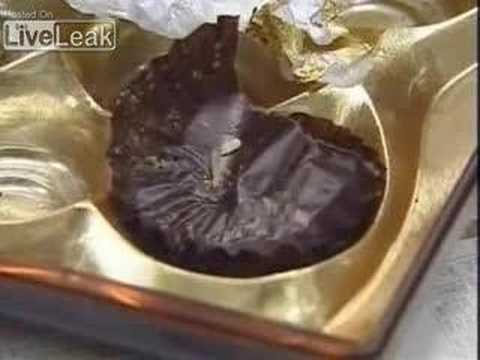Chinese Counterfeit Chocolate with Larvae Worms