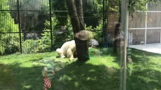 Медведь Алькор переехал в новые вольер