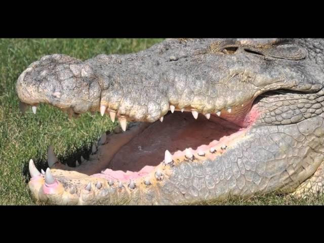 Reptile Gardens Maniac Videos   Reptile Gardens