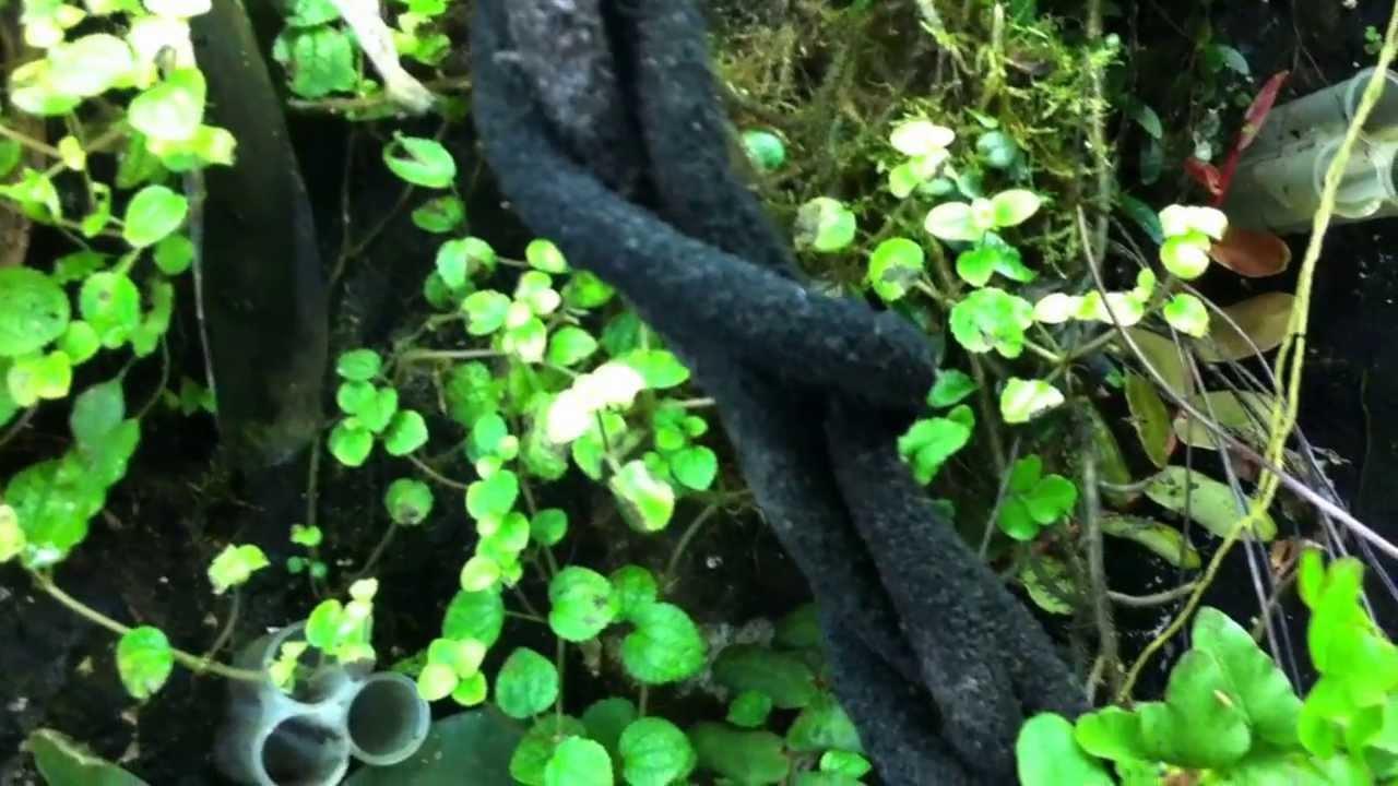 Dart frog Display Vivarium with tropical plants - YouTube