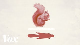 How red squirrel pelts shaped our monetary systems [Advertiser content from Zelle]