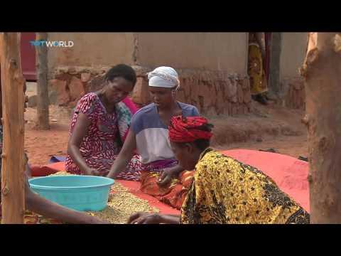 Money Talks: Rwanda's coffee boom, Fidelis Mbah reports