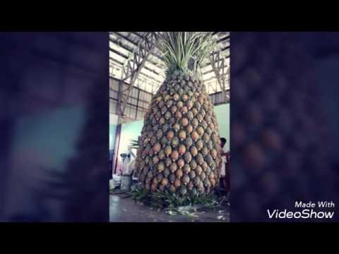 Bhojpuri video new mp4 wap Sunil kumar raj