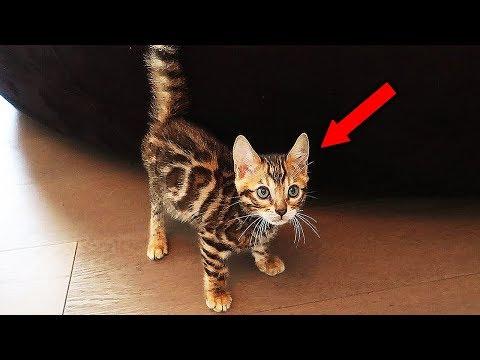 MEET THE FAZE HOUSE NEW PET!! (INSANELY CUTE CAT)