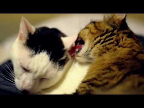 Nikon D90 My Pussy Cats Licking 50mm F 1.8 Lens video