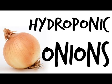 """""""Can You Grow Hydroponic Onions?"""" by Epic Gardening"""