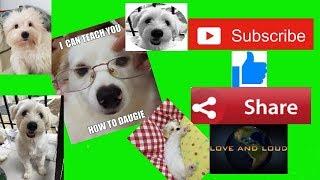 Extraordinary Dog Funny Dogs Compilation/OolongTea