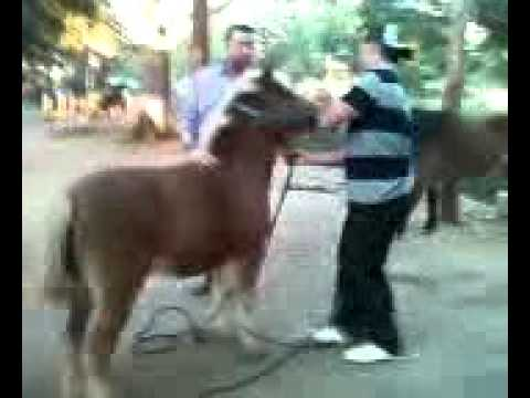 Video descargar video - Videos animales salvajes apareandose ...