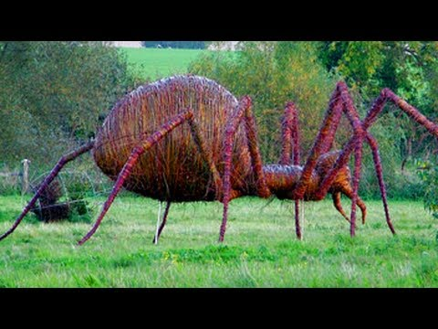 world s largest spider caught on camera spider fight wulf spider vs ...