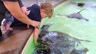 👦Kid BIT by STINGRAY at SEAWORLD!🐬🐳🐋