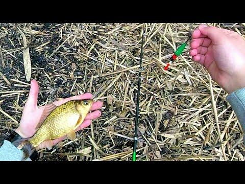 как срезать камыш для рыбалки