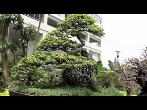 307 Most Beautiful Bonsai in Indonesia