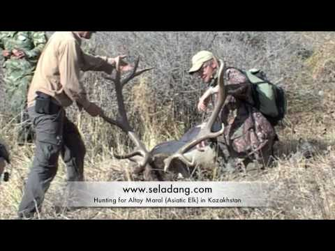maral-2008-hunting-chasse-altai-kazakhstan-by-seladang.html