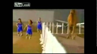 4 Midgets Race a camel (w/ Super Mario Bros. Sounds)