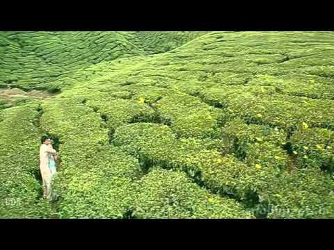 Aisa deewana (dil maange more)[mobimasti.in].mp4 video