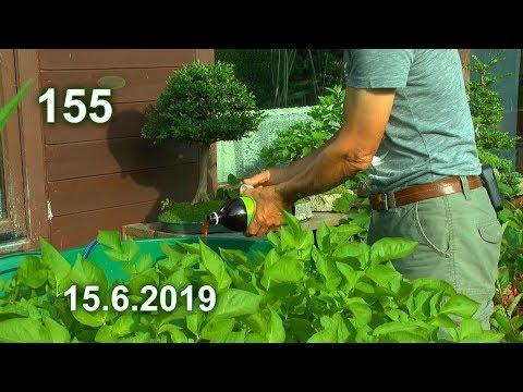 Ab In Den Garten Düngen Und Mehr Sehen Aus Dem Garten Im Juni
